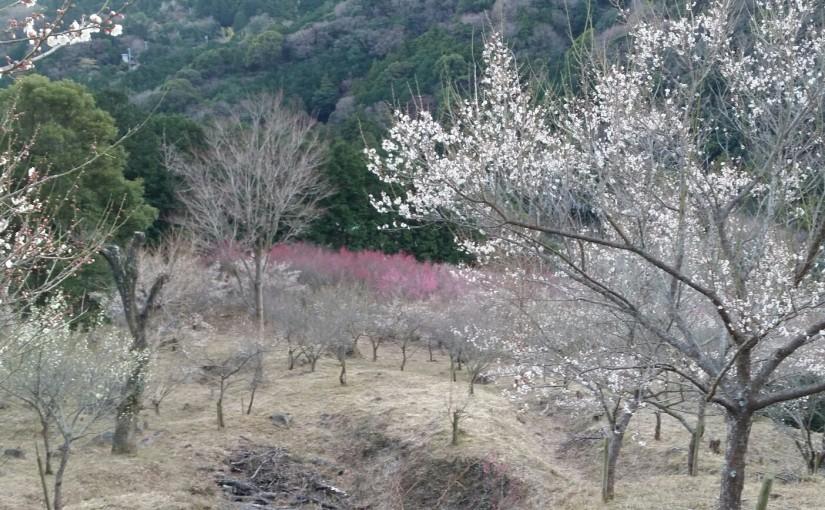 クライミング講習☆スポドリ&湯河原幕岩